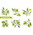 lime branches design elements floral vector image