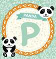 ABC animals P is panda Childrens english alphabet vector image vector image