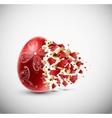 Broken egg vector image