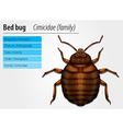 Cimicidae- Bedbug vector image vector image