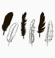 feathers birds vector image