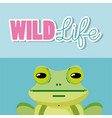 frog wildlife animal cartoon vector image