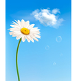 Beautiful white daisy in front of the blue sky vector image vector image