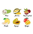 engraved style organic exotic fruits collection vector image