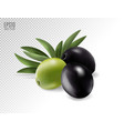 green and black olives on transparent photo vector image vector image