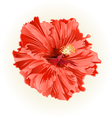 Hibiscus salmon color simple tropical flower vint vector image vector image