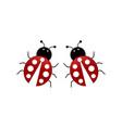 ladybug couple vector image