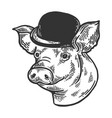 pig animal in bowler hat engraving vector image