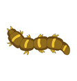 caterpillar insect entomology wildlife and vector image vector image