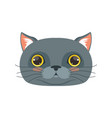 cute british cat head funny cartoon animal vector image vector image