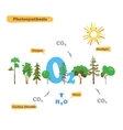 Image of photosynthesis vector image vector image