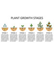 plant growth stages infographics vector image vector image