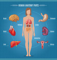 human anatomy parts infographic concept vector image