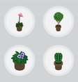 isometric plant set of grower peyote tree and vector image vector image