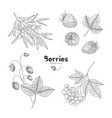collection of hand drawn berries isolated on white vector image