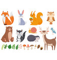 cute woodland animals wild animal forest flora vector image