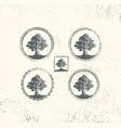 oak tree logo design vector image vector image