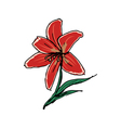 red lily vector image vector image