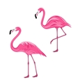 Couple Pink Flamingos Isolated on White Background vector image