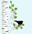 Blackbird on a birch branch vector image vector image