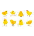 cartoon easter chicks baby farm birds vector image vector image