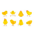 cartoon easter chicks bafarm birds with vector image