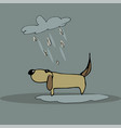 dog in the rain vector image