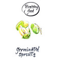 watercolor sprouting seeds vector image