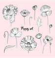 set of various poppy contour flower collection vector image