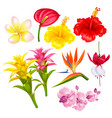 tropical exotic flowers set vector image