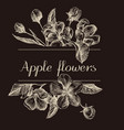 hand drawn design with apple flowers isolated on vector image