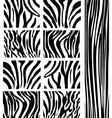 Zebra patterns vector | Price: 1 Credit (USD $1)