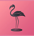 flamingo logo vector image