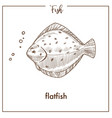 flatfish sketch fish icon of flounder or vector image vector image