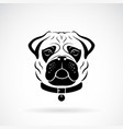 pug dog face design on white background pet vector image