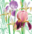 Seamless floral pattern with irises vector image vector image