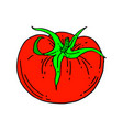 tomato outline isolated on white vector image vector image