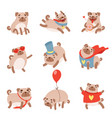 funny pug dog set cute pet animal character in vector image vector image