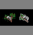 koala animal sleep design premium vector image