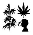 silhouettes of hemp smoking person cannabis leaf vector image
