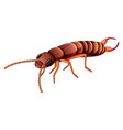 termite on white background vector image vector image