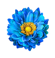Blue Dahlia flower vector image vector image