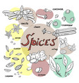hand drawn spices on white background doodle vector image vector image
