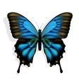 Blue butterfly vector | Price: 1 Credit (USD $1)