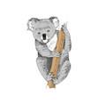 hand drawn koala isolated on white background vector image