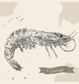 vintage shrimp drawing hand drawn vector image vector image