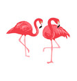 isolated pink flamingos pair hand drawn vector image vector image