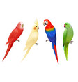 parrots tropical colorful exotic birds macaws vector image
