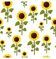 seamless pattern sunflowers cartoon isolated on a vector image