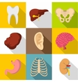 Bodies icons set flat style vector image vector image